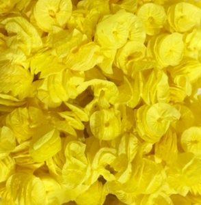 liso amarelo
