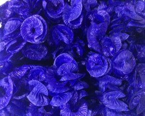 liso azul escuro