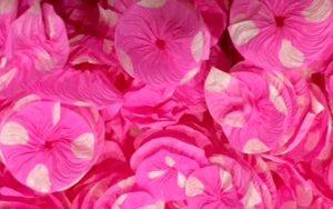 poa pink
